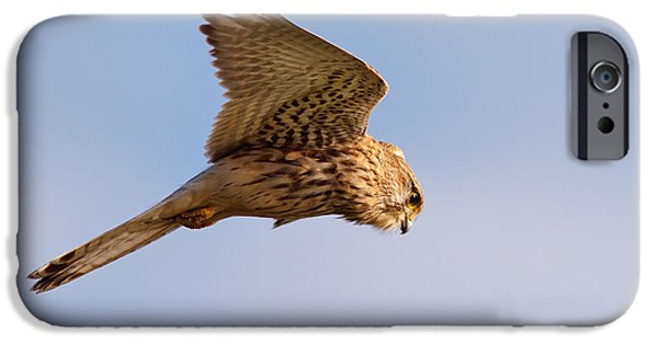 Hovering iPhone Cases - Common Kestrel hovering in the sky iPhone Case by Roeselien Raimond
