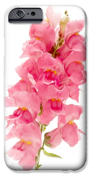 Cut-outs iPhone Cases - Common Snapdragon iPhone Case by Fabrizio Troiani