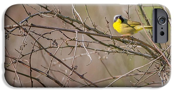 Warbler iPhone Cases - Common Yellowthroat iPhone Case by Bill  Wakeley