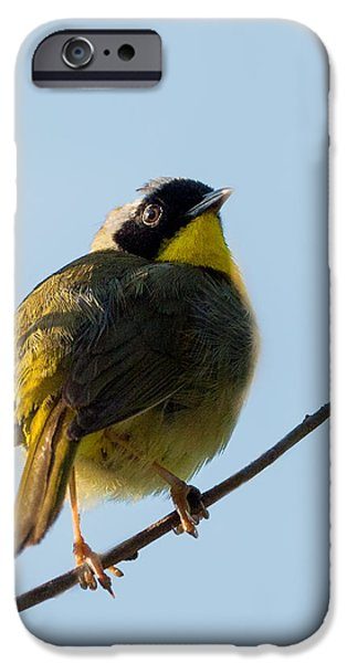 Warbler iPhone Cases - Common Yellowthroat Warbler iPhone Case by Bill  Wakeley