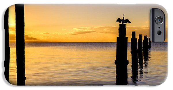 Business Photographs iPhone Cases - Comorant Greets the Sun iPhone Case by Peta Thames