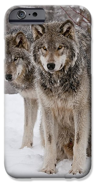 Wolf Image iPhone Cases - Companions iPhone Case by Wolves Only