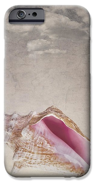 Conch shell on vintage background iPhone Case by Jane Rix