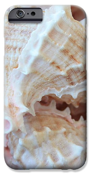 Conches iPhone Case by Carol Groenen