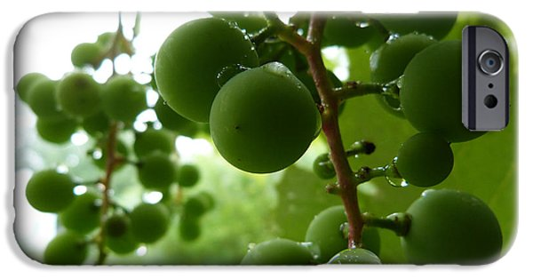 Concord Grapes iPhone Cases - Concord grape iPhone Case by Design Online