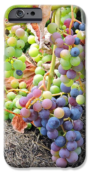 Concord Grapes iPhone Cases - Concord Grapes iPhone Case by Helene Guertin
