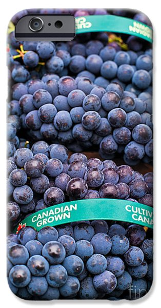 Concord Grapes iPhone Cases - Concord Grapes iPhone Case by Mary  Smyth