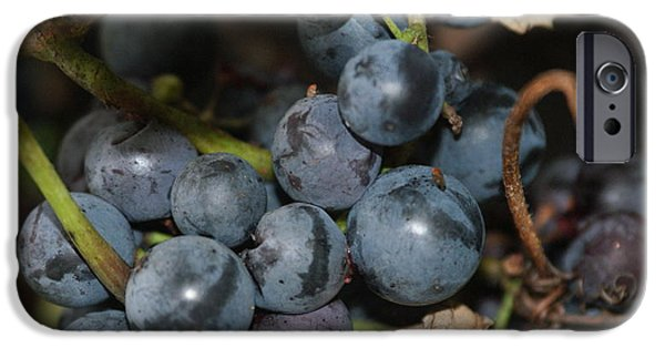 Concord Grapes iPhone Cases - Concord grapes iPhone Case by Rob Luzier