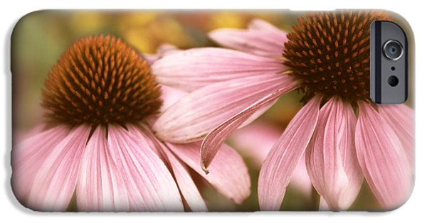 Cone Flower iPhone Cases - Cone Flowers iPhone Case by Jessica Jenney