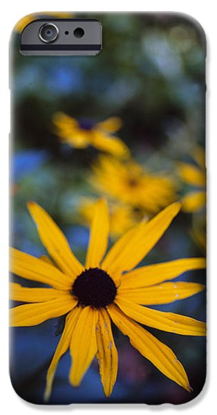 Cone Flowers iPhone Case by Marcio Faustino