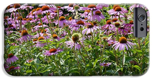 Floral Photographs iPhone Cases - Coneflower Field 2 iPhone Case by Todd and candice Dailey