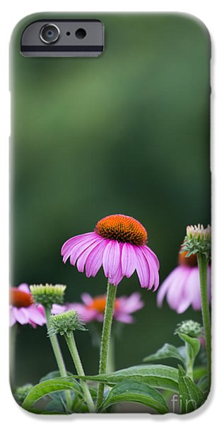 Kaypickens.com iPhone Cases - Coneflower iPhone Case by Kay Pickens