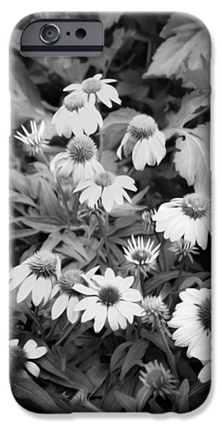 Abstracted Coneflowers iPhone Cases - ConeFlowers Echinacea Rudbeckia BW iPhone Case by Rich Franco