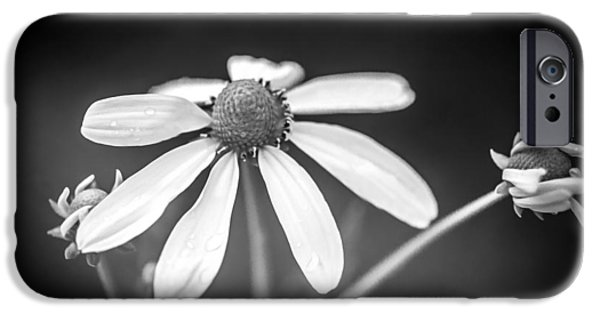 Abstracted Coneflowers iPhone Cases - Coneflowers Echinacea Yellow Painted BW   iPhone Case by Rich Franco