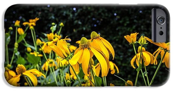Abstracted Coneflowers iPhone Cases - Coneflowers Echinacea Yellow Painted iPhone Case by Rich Franco
