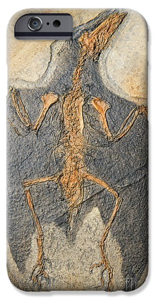 Confuciusornis Fossil iPhone Case by Millard H Sharp