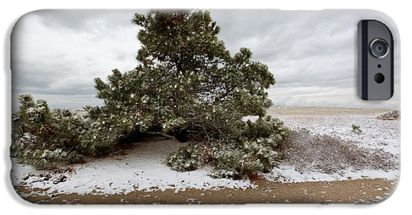 Storm Clouds Cape Cod iPhone Cases - Conifer on a Snowy Cape Cod Beach iPhone Case by Michelle Wiarda