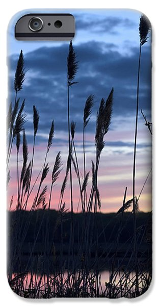 Salt Marsh. New England iPhone Cases - Connecticut Sunset with Reeds Series 4 iPhone Case by Marianne Campolongo