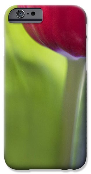 Contemporary Tulip Close Up iPhone Case by Natalie Kinnear