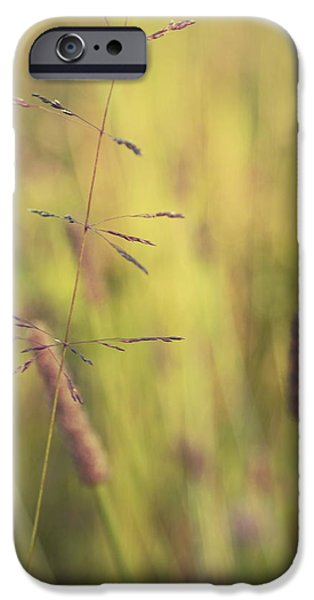 Nature Abstracts iPhone Cases - Contrario - gr02a iPhone Case by Variance Collections