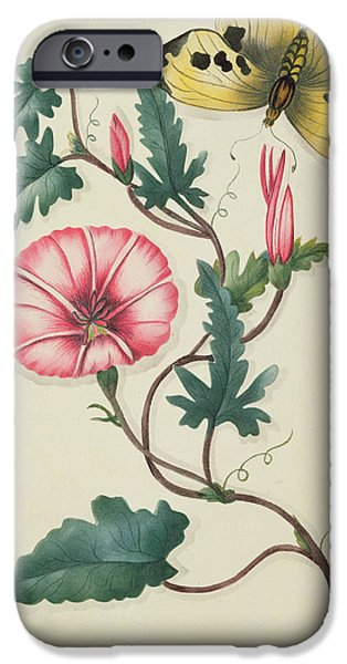 19th Century iPhone Cases - Convolvulus with Yellow Butterfly iPhone Case by English School