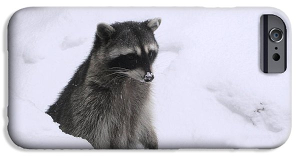 Four Animal Faces iPhone Cases - Coon Needs Snowshoes iPhone Case by Kym Backland