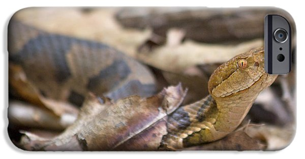 Serpent iPhone Cases - Copperhead in the Wild iPhone Case by Betsy A  Cutler