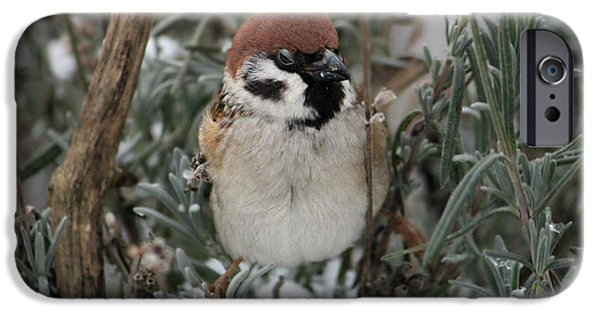 Animal Picture iPhone Cases - Coquettish Sparrow In Lavender iPhone Case by Heike Hultsch