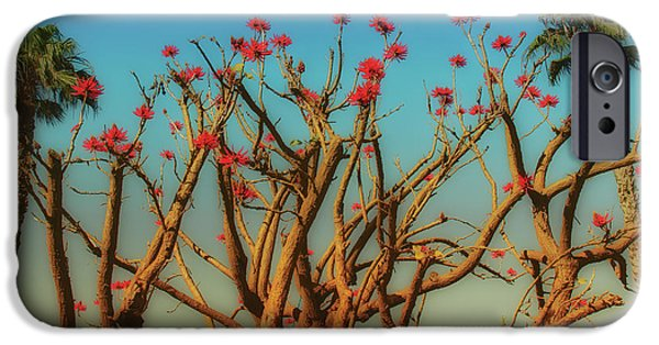 Tree Art Print iPhone Cases - Coral and Palm Trees iPhone Case by Joseph Hollingsworth