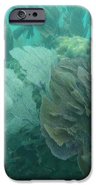Coral Fans iPhone Case by Adam Jewell