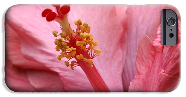 Florida Flowers Photographs iPhone Cases - Coral Hibiscus iPhone Case by Sabrina L Ryan