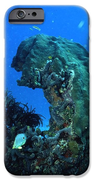 Archives iPhone Cases - Coral in the Gulf of Mexico iPhone Case by Retro Images Archive