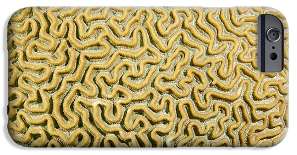 Calcium Carbonate iPhone Cases - Coral Maze iPhone Case by Jean Noren
