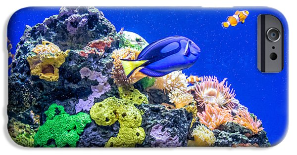Clown Fish Photographs iPhone Cases - Coral Reef iPhone Case by Steve Harrington