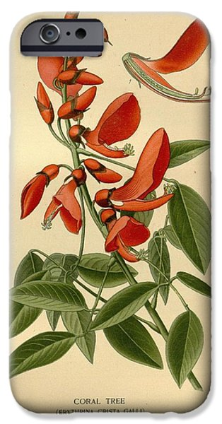 Business Drawings iPhone Cases - Coral Tree iPhone Case by Philip Ralley