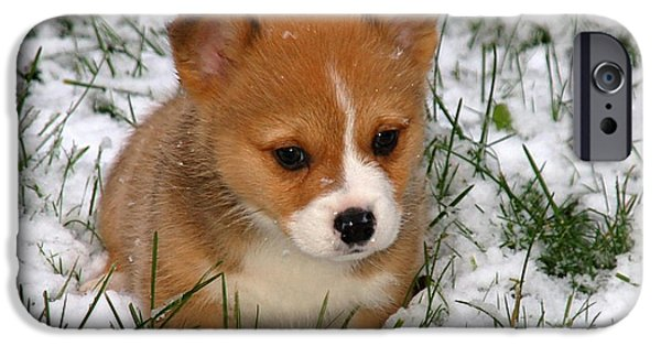 Puppies iPhone Cases - Corgi Puppy  iPhone Case by Marvin Blaine