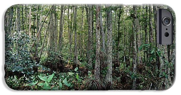 Aquatic Plants iPhone Cases - Corkscrew Swamp iPhone Case by Gregory G. Dimijian