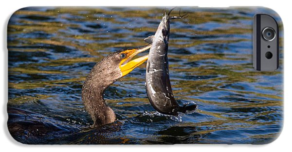 Water iPhone Cases - Cormorant and Its Meal iPhone Case by Andres Leon