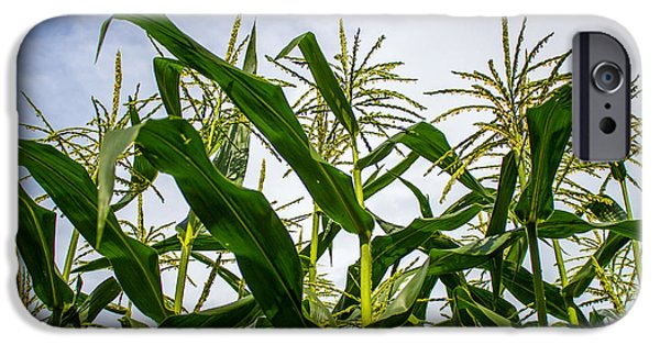 Recently Sold -  - Crops iPhone Cases - Corn 1 iPhone Case by Chad Rowe