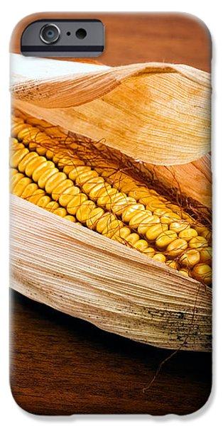 Corn ear iPhone Case by Sinisa Botas