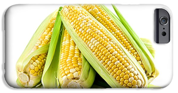 Agriculture iPhone Cases - Corn ears on white background iPhone Case by Elena Elisseeva