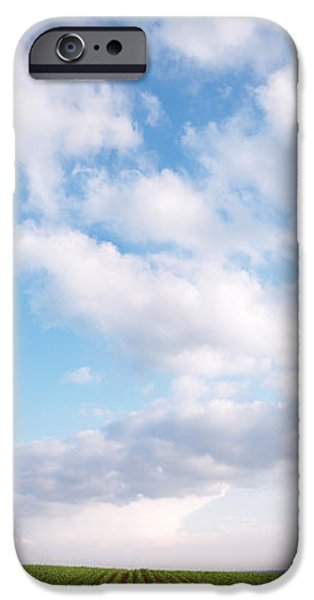 Agriculture iPhone Cases - Corn Field And Clouds iPhone Case by Panoramic Images
