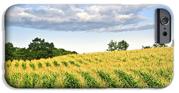 Fields iPhone Cases - Corn field iPhone Case by Elena Elisseeva