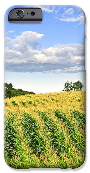 Corn field iPhone Case by Elena Elisseeva