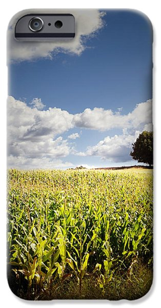 Farm iPhone Cases - Corn field iPhone Case by Les Cunliffe