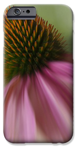 Corn iPhone Cases - Corn Flower iPhone Case by Mike McGlothlen