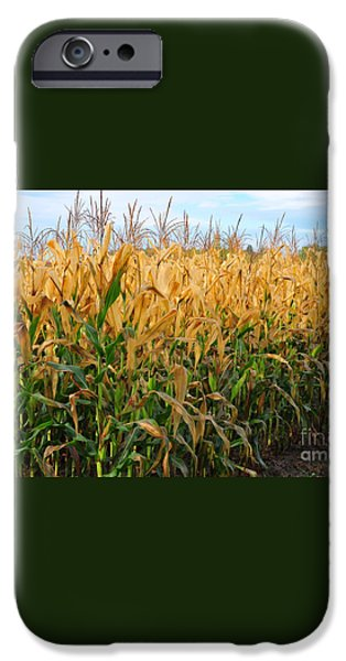 Corn Harvest iPhone Case by Terri Gostola