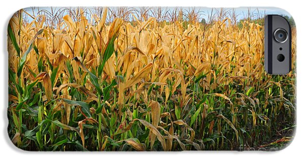 Going Green iPhone Cases - Corn Harvest iPhone Case by Terri Gostola