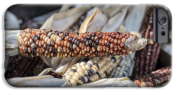 Farm Stand Photographs iPhone Cases - Corn of Many Colors iPhone Case by Caitlyn  Grasso