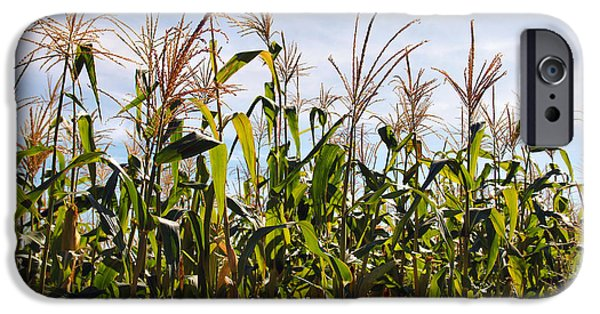 Corn iPhone Cases - Corn Production iPhone Case by Carlos Caetano